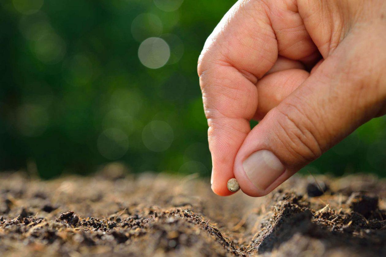 Семена за всяка нужда